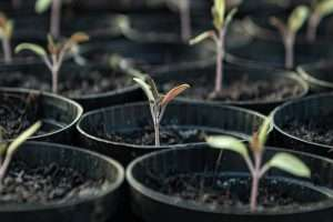 About Me - Seedling Growing